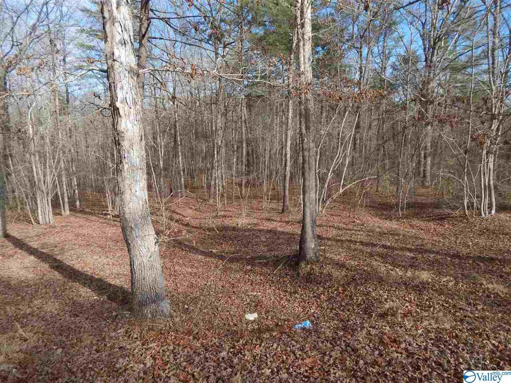 Photo of home for sale at LOT 4 Road 935, Mentone AL