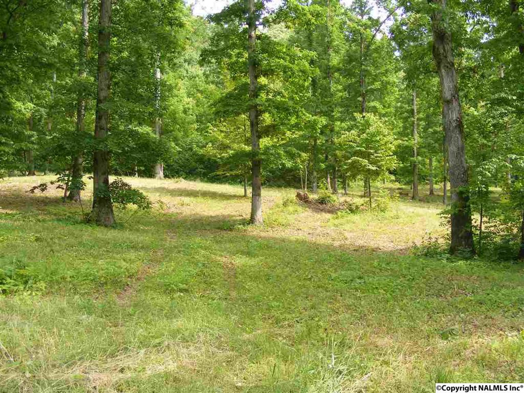 Photo of home for sale at County Road 608, Valley Head AL