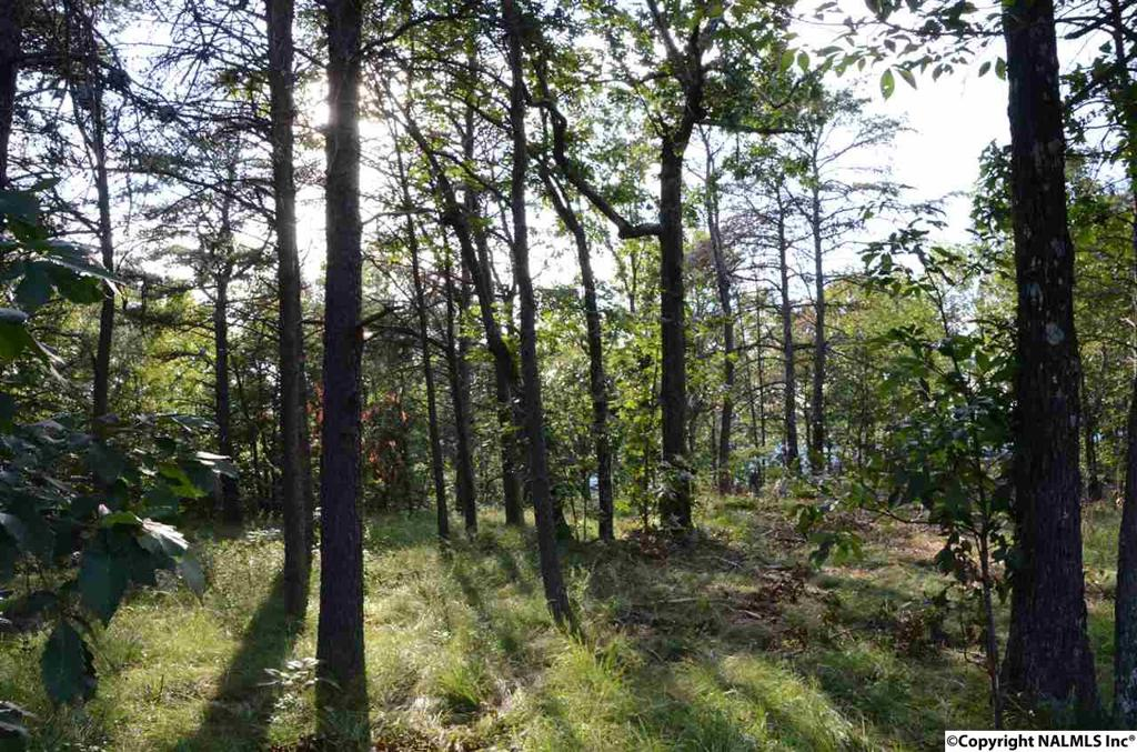 Photo of home for sale at 00001 County Road 89, Mentone AL