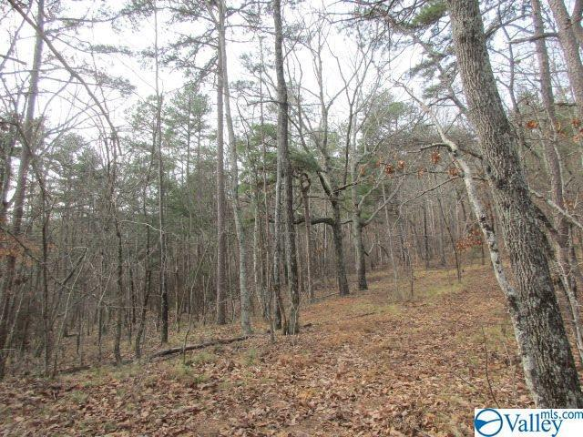 Photo of home for sale at 0 Owens Switch Road, Gadsden AL
