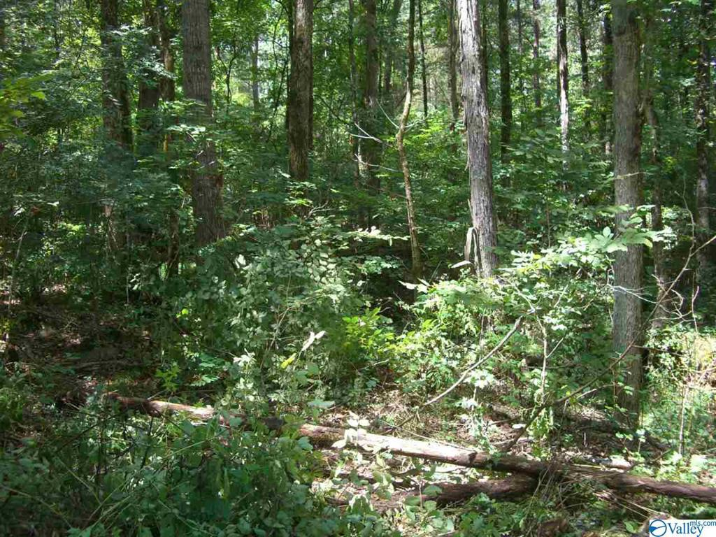 Photo of home for sale at east Willow Street, Scottsboro AL