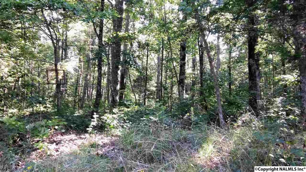 Photo of home for sale at TR 7 Blowing Cave Road, Gurley AL