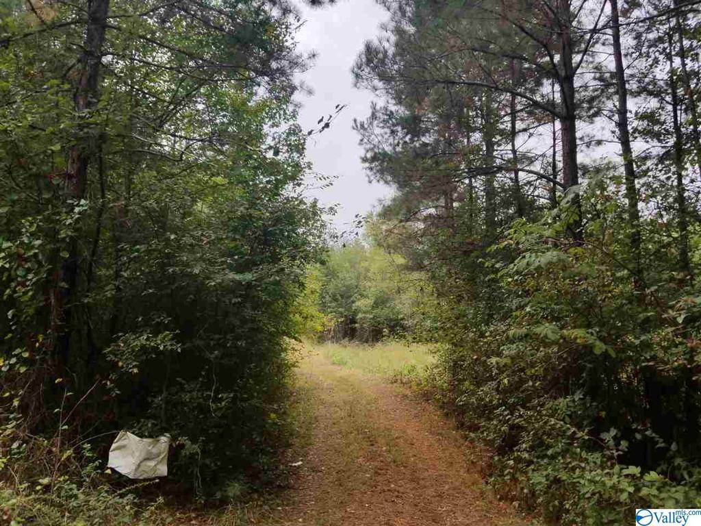 Photo of home for sale at 1317 County Road 114, Gaylesville AL