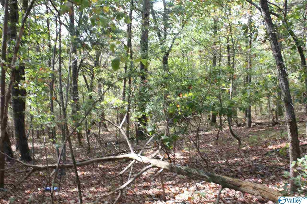 Photo of home for sale at 195 County Road 844, Mentone AL
