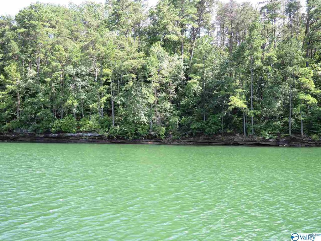 Photo of home for sale at 59 Sipsey Overlook Road, Double Springs AL