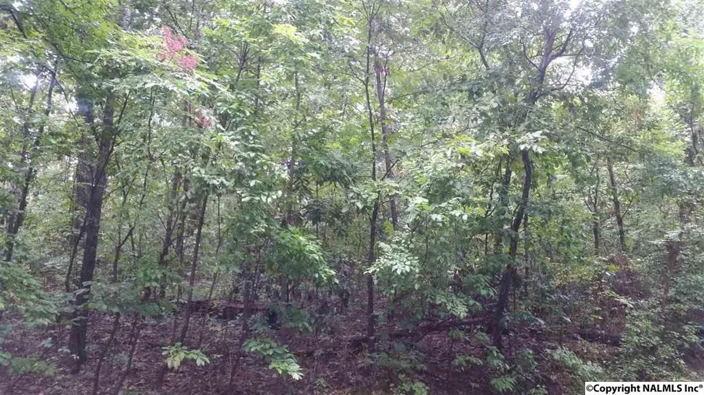 Photo of home for sale at Panorama Way, Guntersville AL
