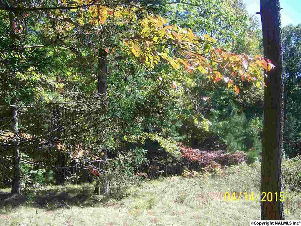 Photo of home for sale at 000 County Road 39 E, Fackler AL