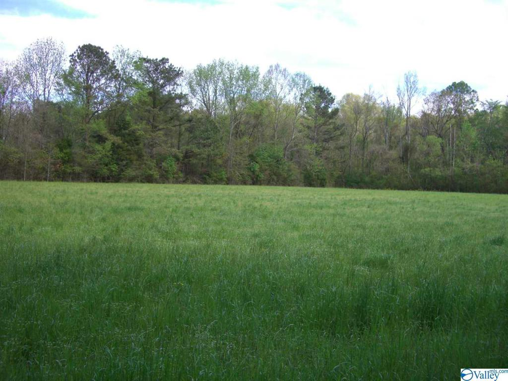 Photo of home for sale at 45 Highway 72, Scottsboro AL