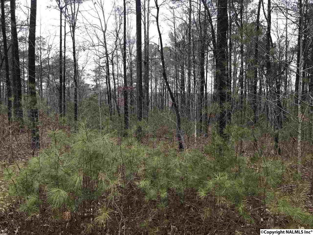 Photo of home for sale at County Road 103, Mentone AL