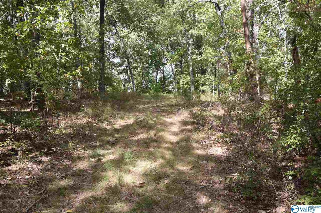 Photo of home for sale at 00 County Road 166, Fort Payne AL