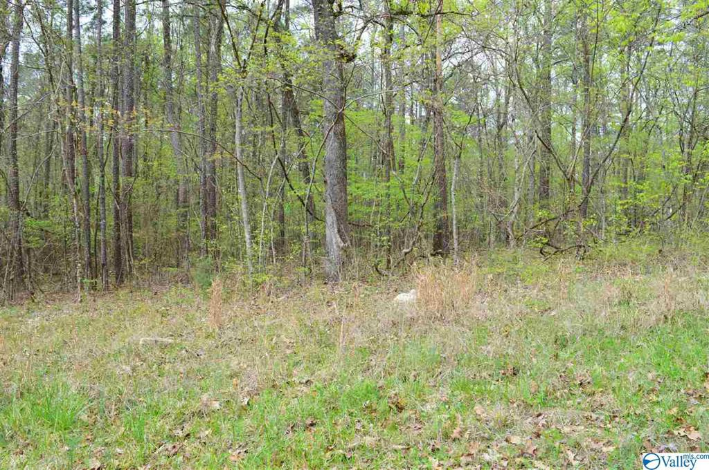 Photo of home for sale at Lot 80 County Road 608, Cedar Bluff AL