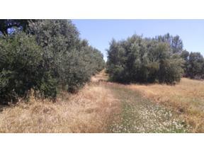 Property for sale at 5352 E. Burris Road, Loma Rica,  California 95901