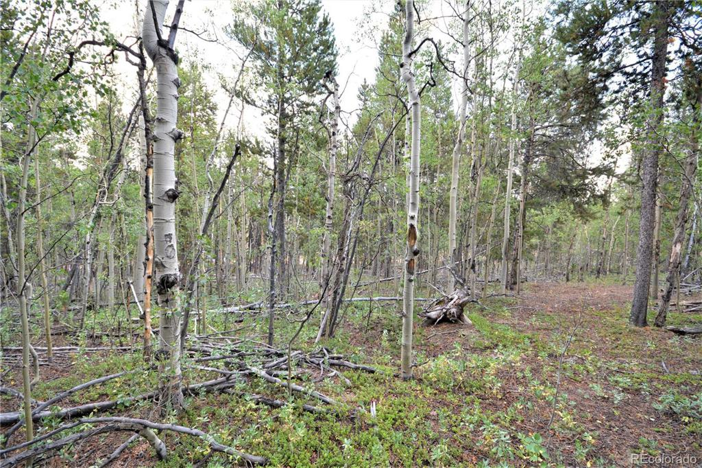 Photo of home for sale at 1250 Lumber Jack Road, Fairplay CO