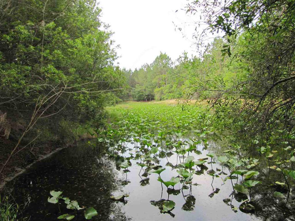 Photo of home for sale in Monticello FL