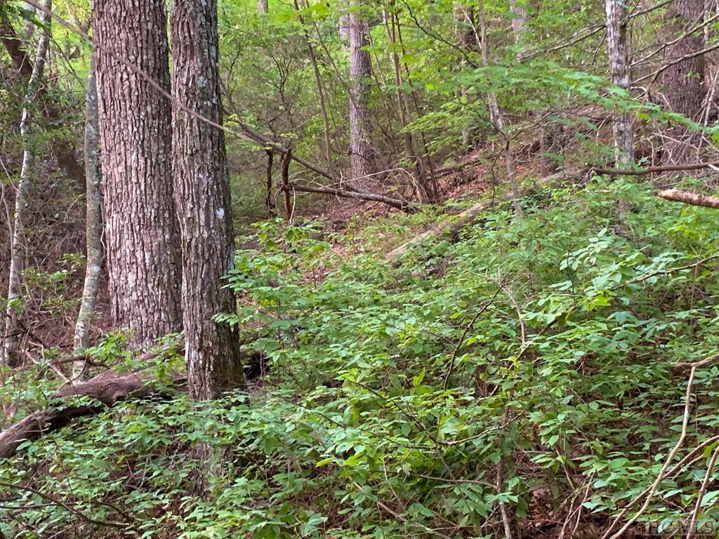 Photo of home for sale at Lot 43 Spring Forest Road, Sapphire NC