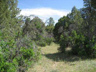 Photo of home for sale at U 7, L 69, Ponderosa S/D, Chama NM