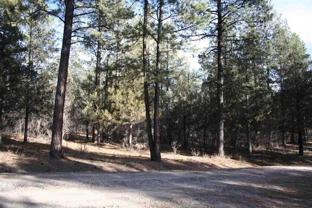 Photo of home for sale at Pine Drive, Brazos Estates, Chama NM