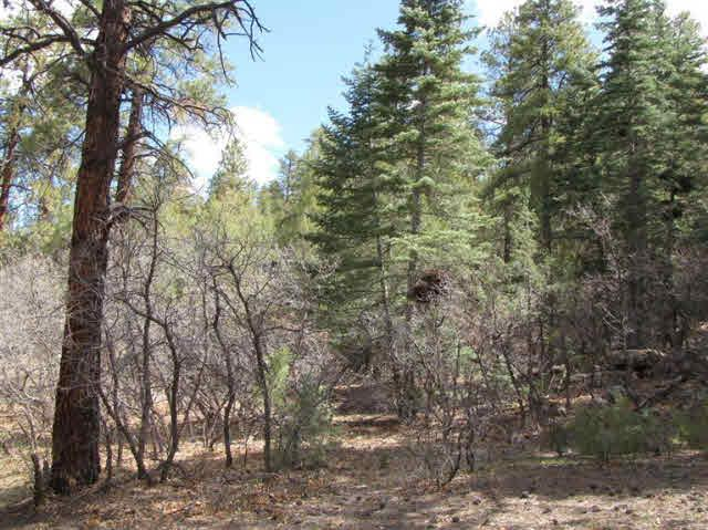 Photo of home for sale at U-7, TR 95, Ponderosa, Chama NM
