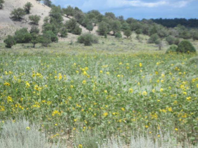 Photo of home for sale at Lot 178 A, B, C Unit 1, Tierra Amarilla NM