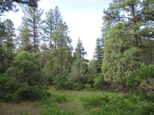 Photo of home for sale at Lot 5, Block 3, Brazos Meadows, Chama NM