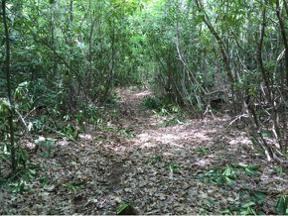 Property for sale at 00 Rabbit Hollow, Mountain City,  Tennessee 37683