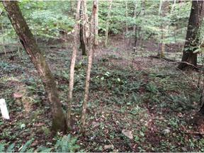 Property for sale at 00 Thistlewood Trail, Mountain City,  Tennessee 37683