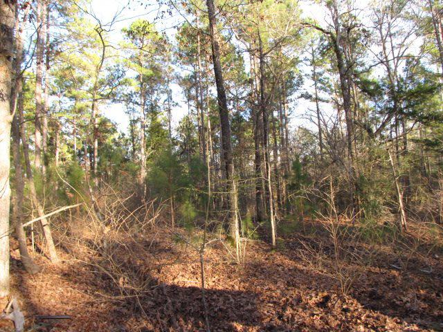 Photo of home for sale at TBD CR 4248, Reklaw TX