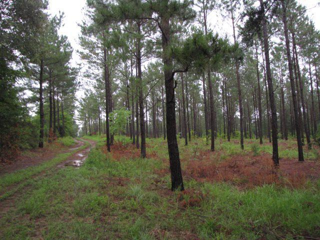 Photo of home for sale at TBD CR 4174, Laneville TX