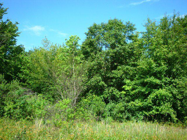 Photo of home for sale at Lot 17 Heather Dr, Texarkana TX