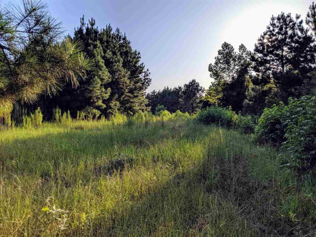Photo of home for sale at TBD County Road 4344, Bivins TX